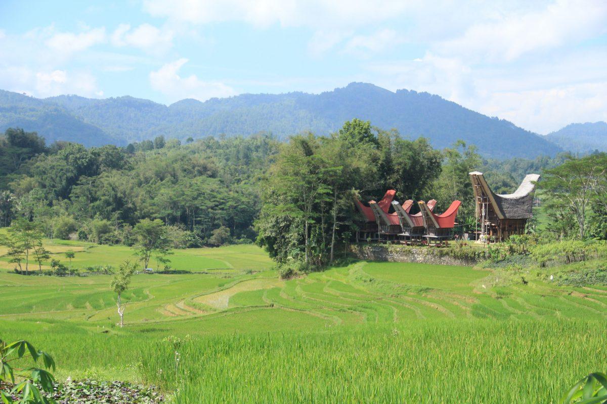 Bentangan sawah di Toraja